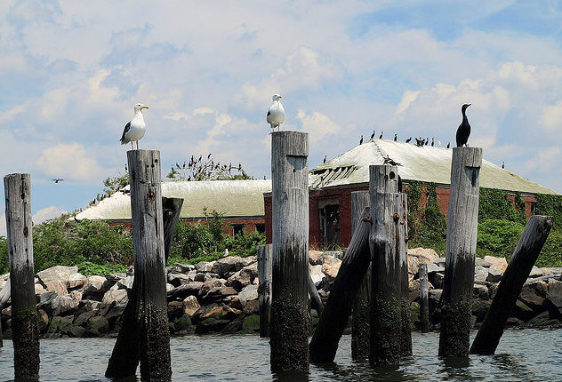 Swinburne Island-Birds-Closeup-Staten Island-New York-Untapped Cities